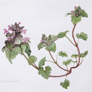 Botanical Watercolor 01