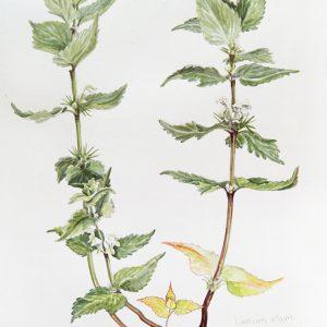 Botanical Watercolor 02