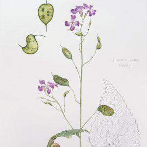 Botanical Watercolor 03