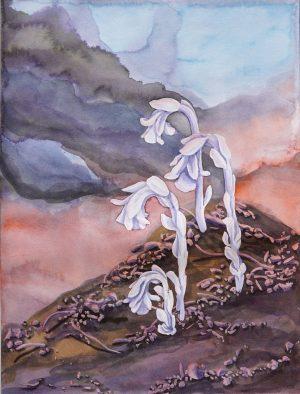 Naturalist Watercolors