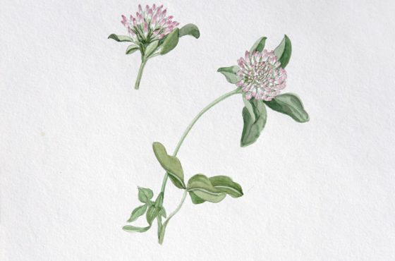 Spring Botanical Watercolor Workshop